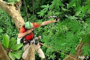 KB15-10: Regenwald Costa Rica, Abbildung 6