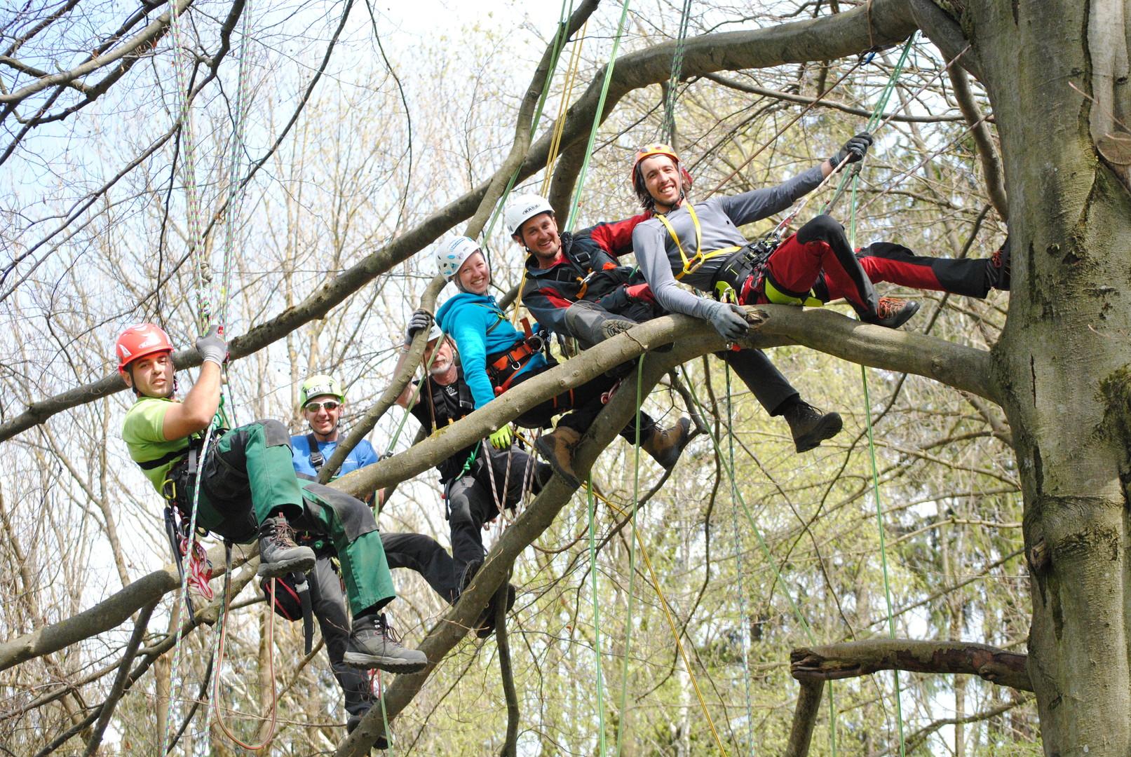 Kletterausrüstung Ulm : Skt a u2013 münchner baumkletterschule