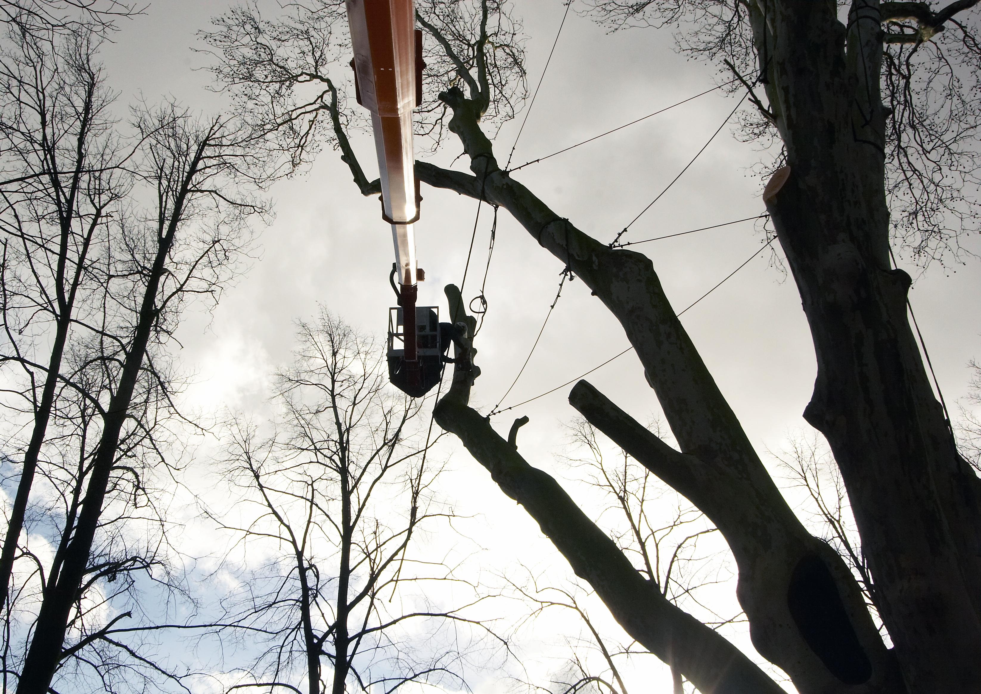 AS Baum 2