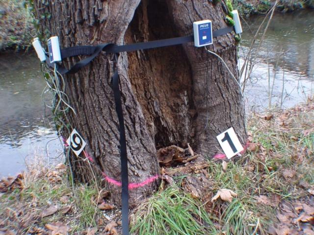 FLL-Aufbaumodul 2 Vertiefung Baumkontrolle
