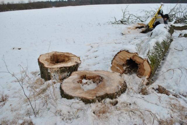 FLL-Aufbaumodul 3 Baumschutz & Krankheiten