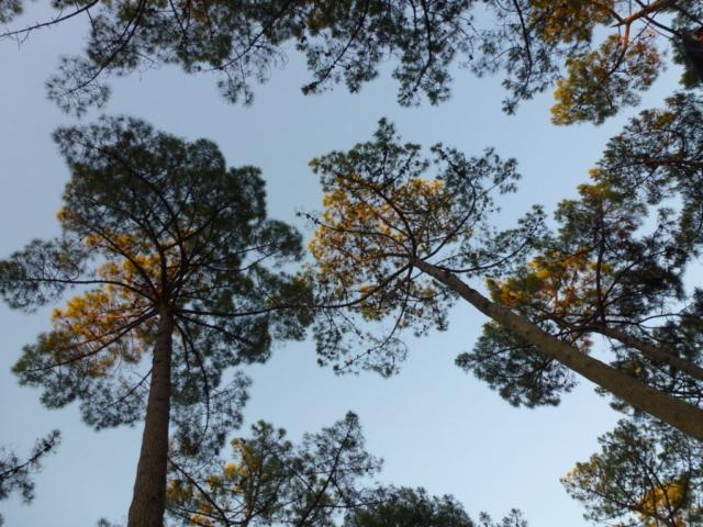 Baumbeurteilung