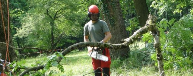 AS Baum 1