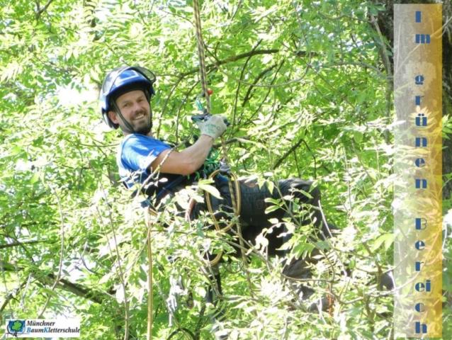 Existenzgründung in der Baumpflege