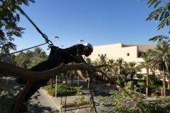 Baumpflege in der Wüste