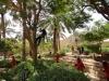 Baumpflege Riyadh