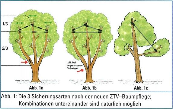Kronensicherung: Drei Arten nach ZTV-Baumpflege