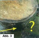 Ausfluss von Ligninsäure aus Birkenstamm