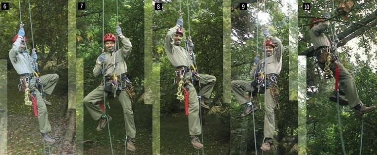 Tree Walking: Aufstiegsbewegung
