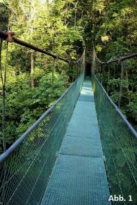 KB15-10: Regenwald Costa Rica, Abbildung 1