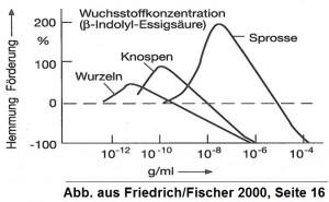 KB15-13: Schlankschnitt, Grafik 1