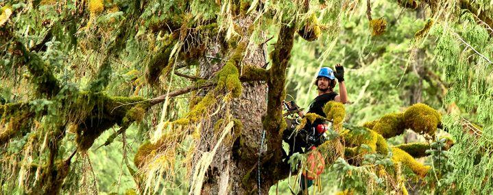 Baumpflegeportal: 'Wilderness International: Schutz der Giganten'