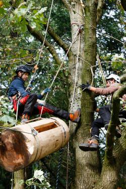 Zwei Baumkletterer montieren Klotzbeute im Baum