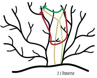Zeichnung von Ästen mit verschiedenen Seilen und Wurfhaken