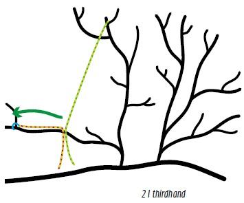 Zeichnung von Ästen mit Seilen, Richtungspfeil und Wurfhaken